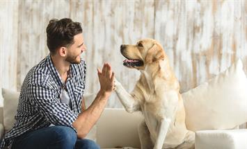 Paramount Properties Blog - What You Need to Know When Renting with Pets